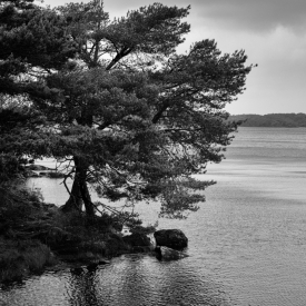 ©chris bone - killarney np 2 bw