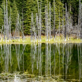 ©chris bone - tree stump reflections 2
