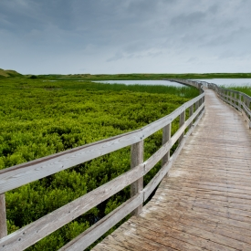 ©chris bone - boardwalk - bowley pond