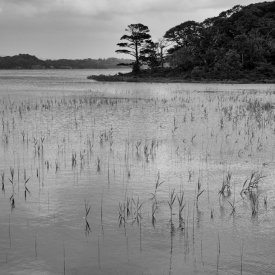 ©chris bone - killarney np 1 bw