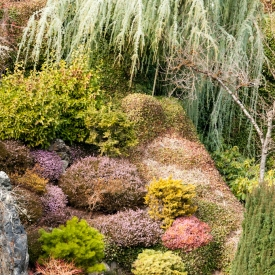 ©chris bone - butchart gardens 1
