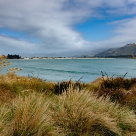 ©chris bone - otago peninsula 1